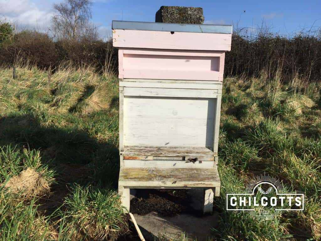 Beehive in February at Chilcotts Farm