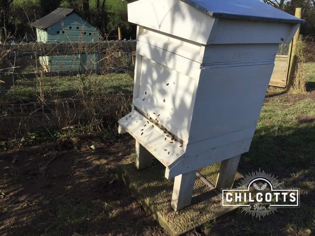 Beehive in March at Chilcotts Farm - Bees are flying