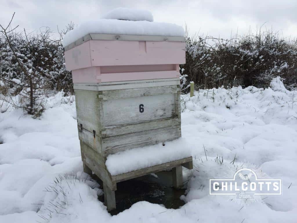 Beehives Covered in Snow at Chilcotts Farm