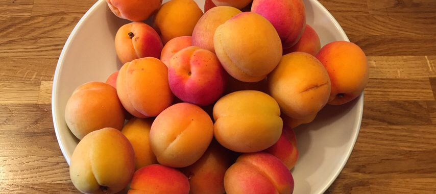 Fresh Apricots in a bowl to be prepared for Apricot Jam at Chilcotts Farm