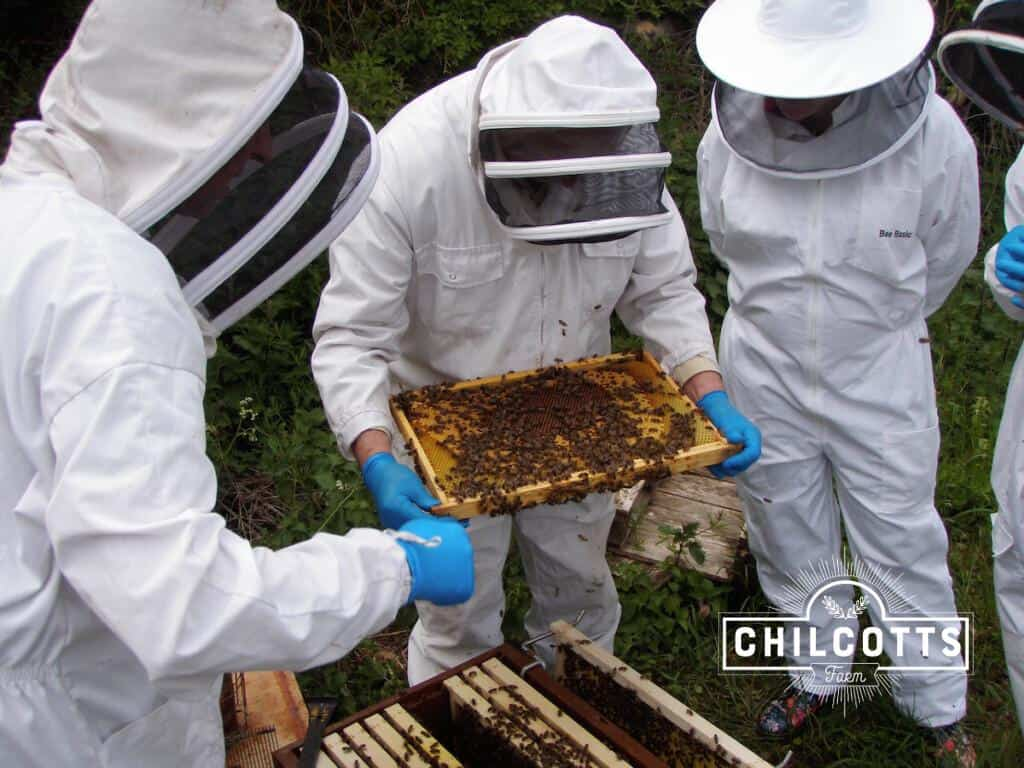 Honey Bee Hive inspection by Bee keepers
