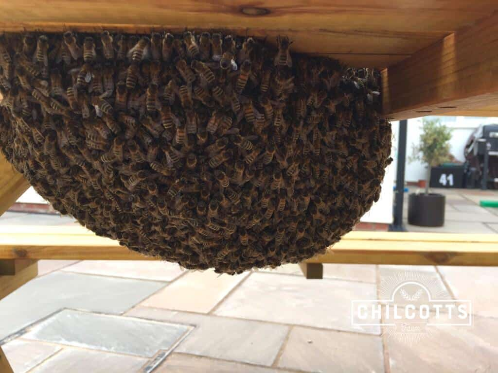 Swarm of honey bees underneath a picnic table