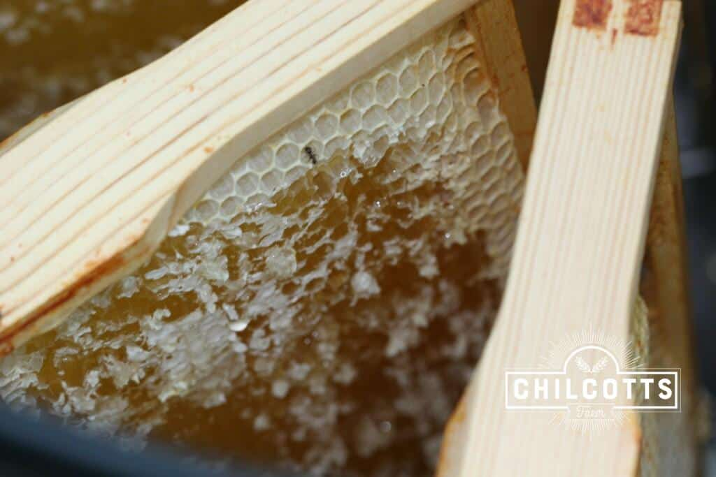 The cappings scrapped off the top of the honeycomb