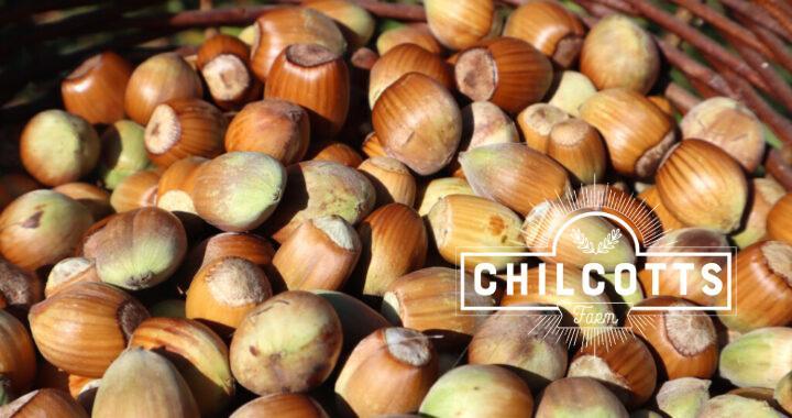 Hazel nuts grown in North Devon