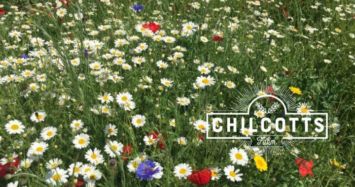 Wildflower meadow in Barnstaple